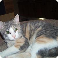 Adopt A Pet :: CASSIDY - Medford, WI