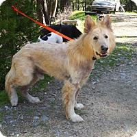 Adopt A Pet :: Mr Banks - Rogue River, OR