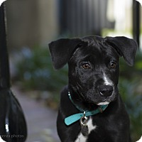 Adopt A Pet :: Zoey - Baton Rouge, LA