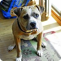 Adopt A Pet :: Chuck - Detroit, MI