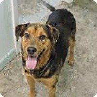German Shepherd Dog/Labrador Retriever Mix Dog for adoption in Cottonport, Louisiana - Abel
