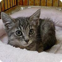 Adopt A Pet :: Olive - Massapequa, NY