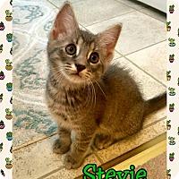 Adopt A Pet :: Stevie - Atco, NJ