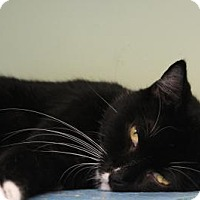 Adopt A Pet :: Princess Buttercup - Indianapolis, IN