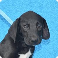 Adopt A Pet :: **REYNOLD** MEET SEPT 24TH! - Mukwonago, WI