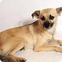 Adopt A Pet :: Rico Chi - St. Louis, MO