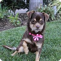 Adopt A Pet :: EMMALINE - Newport Beach, CA
