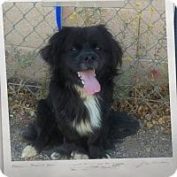 Adopt A Pet :: Dillinger - Mesa, AZ