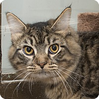 Adopt A Pet :: Bob - Troy, OH