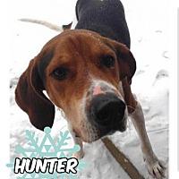Adopt A Pet :: Hunter - Des Moines, IA