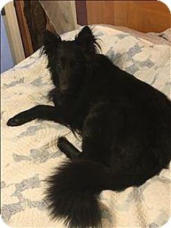 German Shepherd Dog Mix Dog for adoption in Topeka, Kansas - Jet