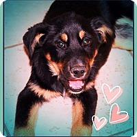 Adopt A Pet :: MONTY - CUDDLER! - Chandler, AZ