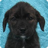 Adopt A Pet :: Buster Joyride - Cuba, NY