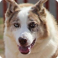 Adopt A Pet :: Courage - Ridgway, CO