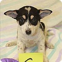 Adopt A Pet :: Jasmine(PENDING!) - Chicago, IL