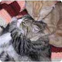 Adopt A Pet :: Zylo - Davis, CA