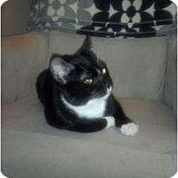 Adopt A Pet :: Angus - San Ramon, CA