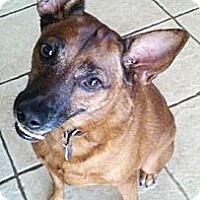 Adopt A Pet :: Mavrick - Gilbert, AZ