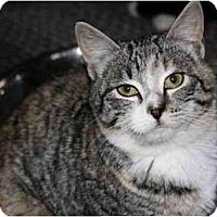 Adopt A Pet :: Maisy - Davis, CA