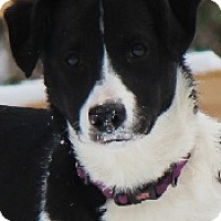 Adopt A Pet :: Scout - Oliver Springs, TN