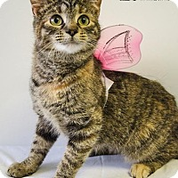 Adopt A Pet :: KILEY - Sandusky, OH