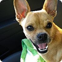 Adopt A Pet :: Chica - Salem, OR