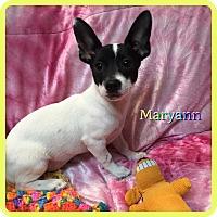 Adopt A Pet :: Maryann - Hollywood, FL