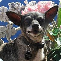 Adopt A Pet :: Lola - Vacaville, CA