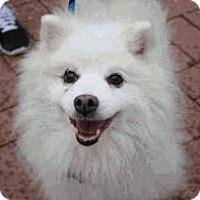 Adopt A Pet :: Tubby - Austin, TX