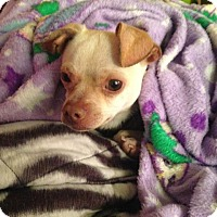 Adopt A Pet :: Pablo - Willingboro, NJ