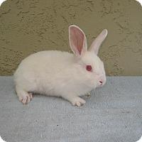 Adopt A Pet :: Pinky - Bonita, CA