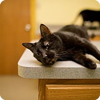 Adopt A Pet :: Blackjack - Valley Falls, KS