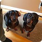 Adopt A Pet :: Raymond & Django (Bonded pair)