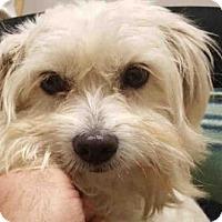 Adopt A Pet :: LILLIANA - Murray, UT