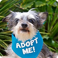 Adopt A Pet :: Sprout - Pacific Grove, CA