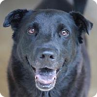 Adopt A Pet :: POPCORN - Kyle, TX