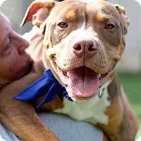 Adopt A Pet :: Corey - Reisterstown, MD