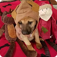 Adopt A Pet :: Jolly - Detroit, MI