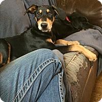 Adopt A Pet :: Grayson - Concord, CA