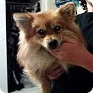 Adopt A Pet :: Yip-Yap