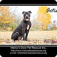 Adopt A Pet :: Artis - Medina, OH