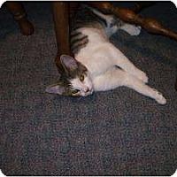Adopt A Pet :: Duke - Henderson, KY