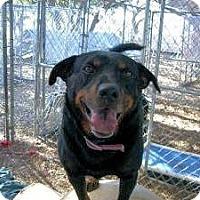 Adopt A Pet :: J.J. - Bergheim, TX