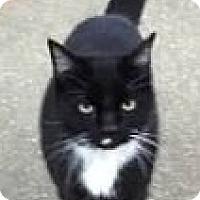 Adopt A Pet :: Gemma - Bear, DE
