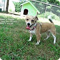 Adopt A Pet :: Naomi - Gadsden, AL