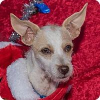 Adopt A Pet :: Lulu - San Marcos, CA