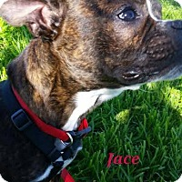 Adopt A Pet :: Jace - Weatherford, TX