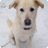 Adopt A Pet :: Jojo - Fennville, MI