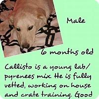 Adopt A Pet :: Callisto - Stephenville, TX
