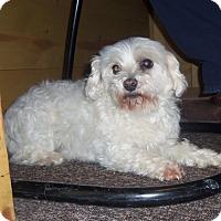 Adopt A Pet :: ZIPPY - Medford, WI